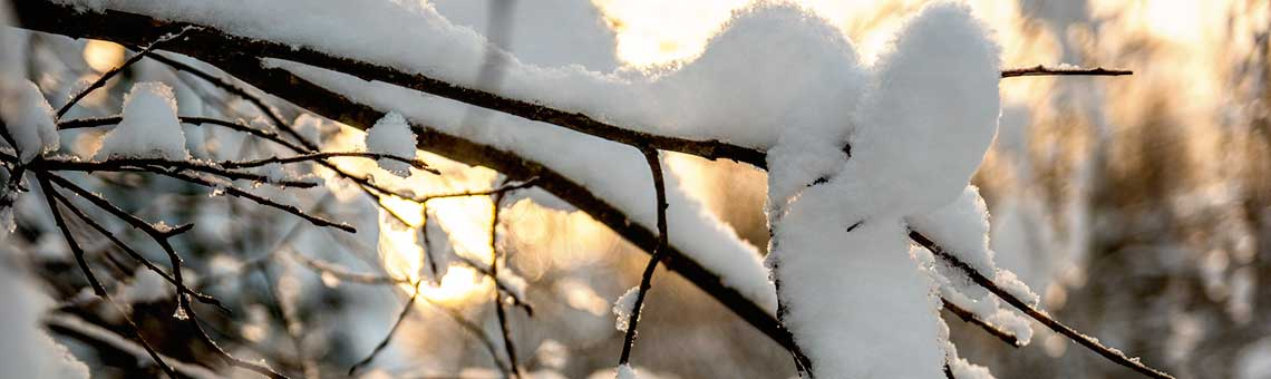 Aktiviteetteja talvella Punkaharjulla